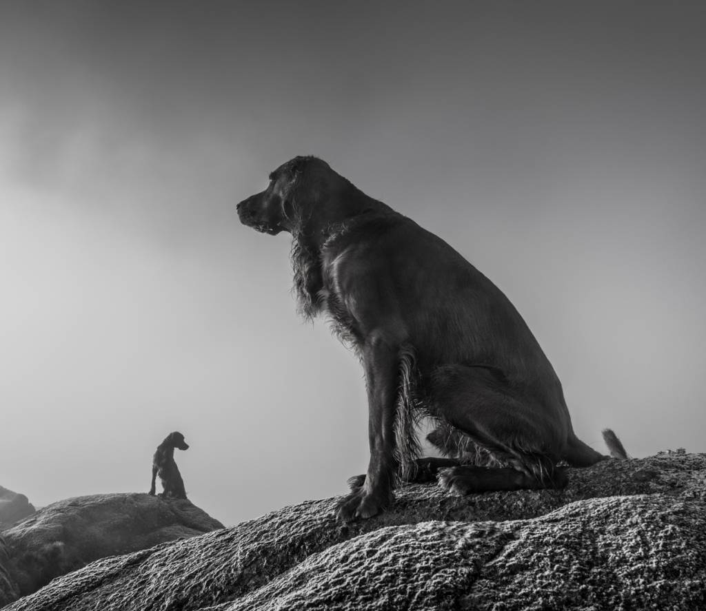 2Audun Nygaard_Dogs_NFFF Silver medal__Projected Digital Images Open Monochrome