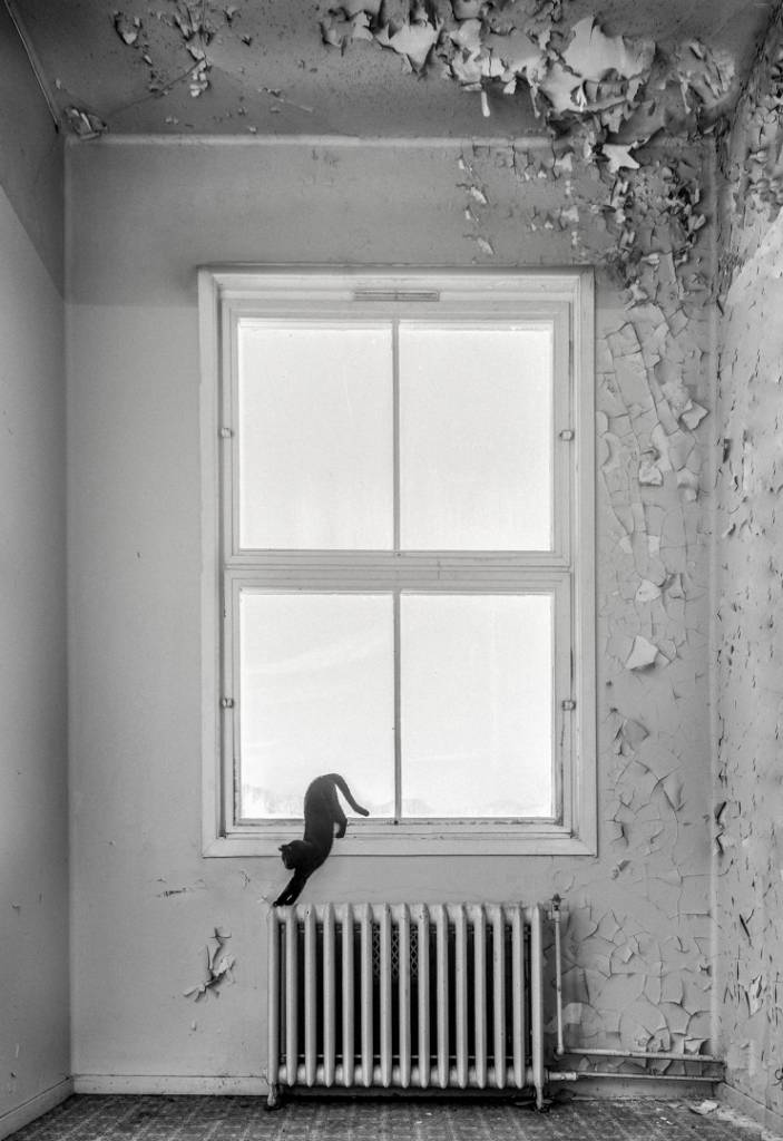 2Audun Nygaard_The Lonely Cat_NSFF Silver medal__Projected Digital Images Open Monochrome