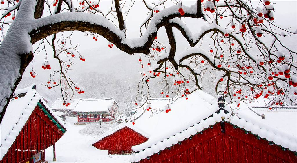 Bongok Namkoong – Snow in Temple – Photo Travel