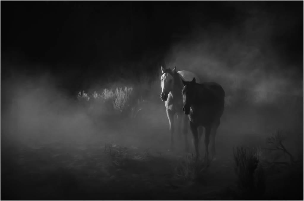 3David Laronde_Two Horses Black and White_NSFF Bronze medal_EFIAPb ARPS APSA EPSA_Projected Digital Images Open Monochrome