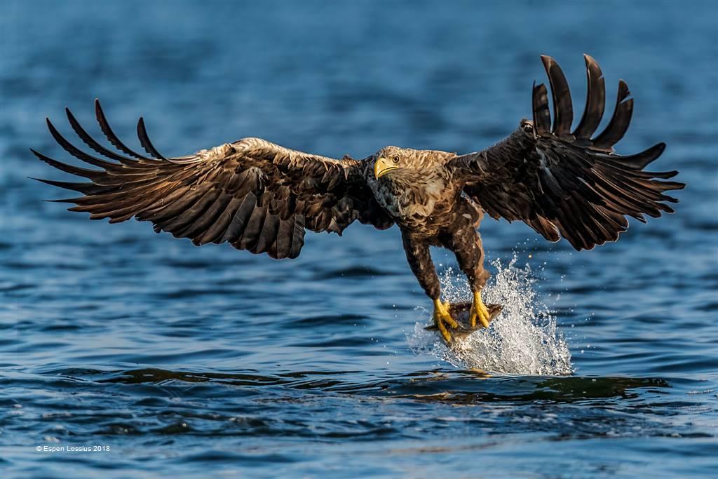Espen Lossius – Eagle Hunting – Open Colour
