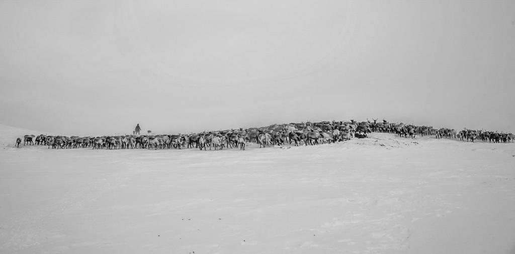 4Haiyan Huang_Nomadic Reindeer Herders8_FIAP Ribbon_PPSA_Projected Digital Images Open Monochrome