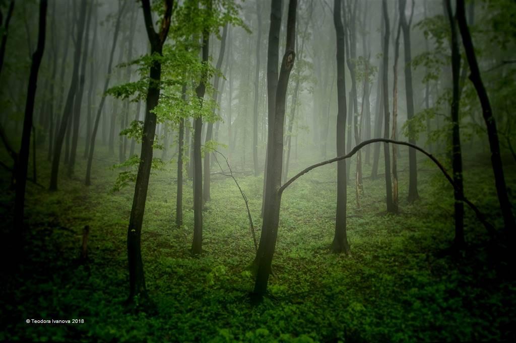 Teodora Ivanova – Mistic Forest – Open Colour