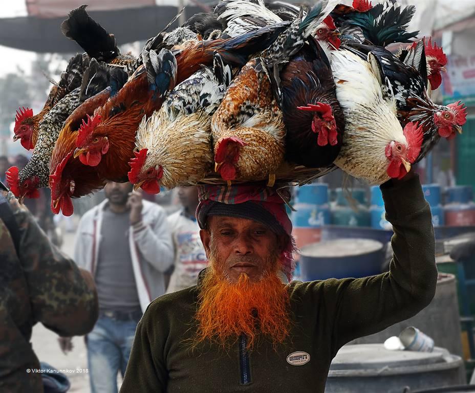 Viktor Kanunnikov – Chicken Carrier 1 – Photo Travel