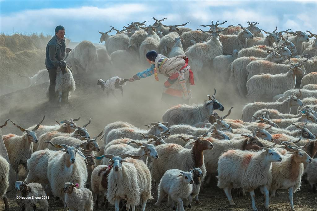 Xiaoyun Zheng – Shepherd Song – Open Colour